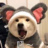 战旗TV九夏
